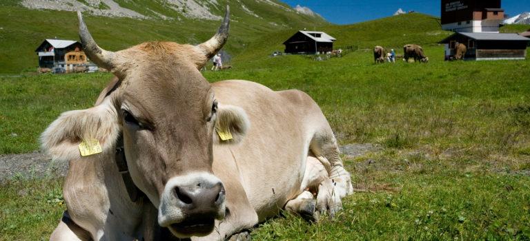 Die Rettung der Milchbauern ist möglich!